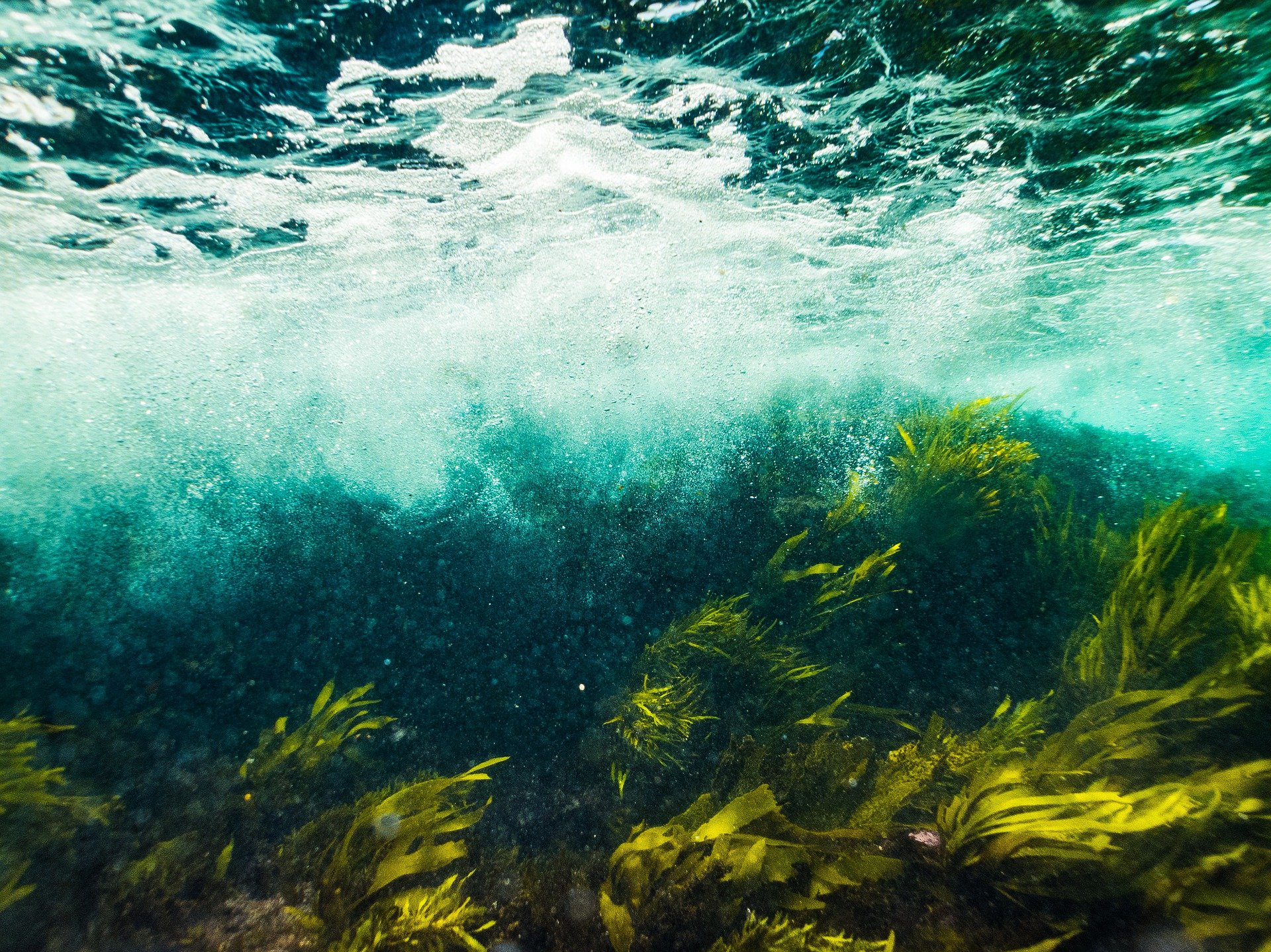 Forget planting trees: This company is making carbon offsets by putting seaweed on the ocean floor